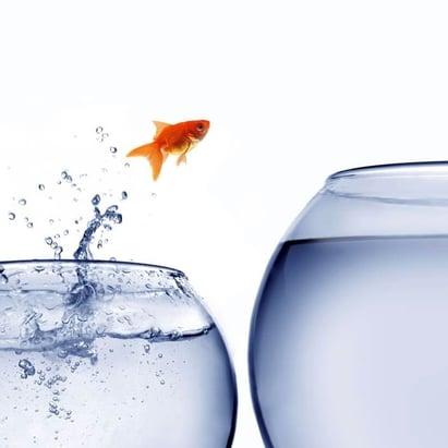 Invico_Partial Fish Jumping.jpg